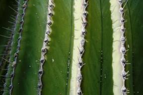 rp_cacti-5.jpg