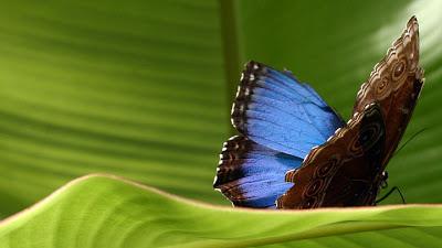 rp_butterflies3.jpg