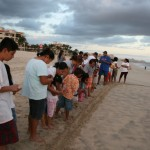 Sea Turtles Season coming to Los Cabos, Baja California Sur